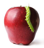 Caterpillar on apple Stock Photography