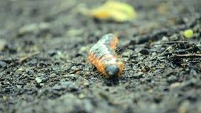 Caterpillar au sol banque de vidéos
