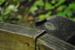 Caterpillar auf dem Zaun Stockbilder