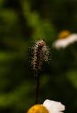 Caterpillar avec des gouttes de l'eau Photos stock