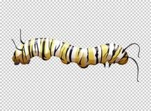 Caterpillar avec rayé jaune et noir illustration stock