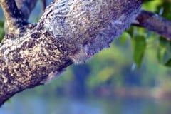 caterpillar band Stock Images