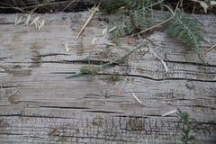 Caterpillar bawić się na deskach i roślinach obrazy stock
