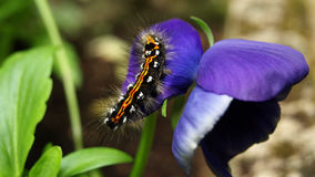 Caterpillar. In the blue flower Royalty Free Stock Photos