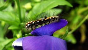 Caterpillar on flowrer Stock Photo