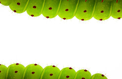 Caterpillar border Stock Photo