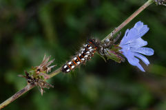 Caterpillar. On a branch with a blue flower Royalty Free Stock Images