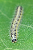 Caterpillar of the butterfly on green leaf Royalty Free Stock Photography