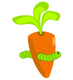 The caterpillar in the carrot Stock Images