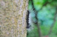 Caterpillar Royalty Free Stock Images