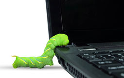 Caterpillar climbing on computer Royalty Free Stock Photography