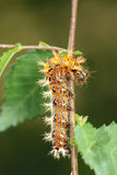 Caterpillar Stock Photography