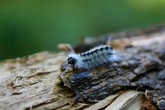 Caterpillar close-up Royalty Free Stock Photography