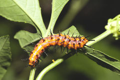 Caterpillar closeup. Royalty Free Stock Images