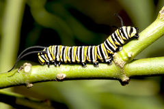 Caterpillar closeup. Stock Photo