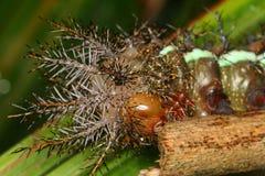 Caterpillar closeup Royalty Free Stock Photo