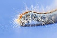 Caterpillar closeup macro Stock Images