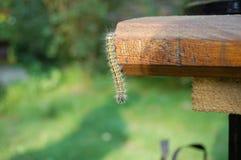Caterpillar. Colored caterpillar on the wood Stock Photo