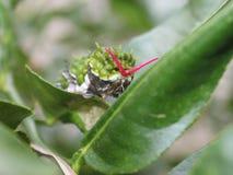 Caterpillar con la antena que sale de la cabeza Foto de archivo