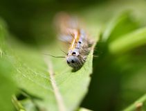 Caterpillar crawling Royalty Free Stock Photos