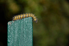 Caterpillar. Crawling on green fence stock image