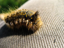 Caterpillar. Crawling in the human leg Stock Image