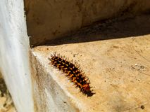 Caterpillar creep royalty free stock images
