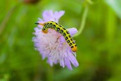 Caterpillar creeps on purple flower Stock Image
