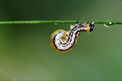 caterpillar curved Royalty Free Stock Photo