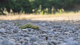 Caterpillar, das mit unfocused Hintergrund geht stock video