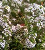 Caterpillar e flor Foto de Stock Royalty Free