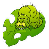 Caterpillar eats leaf Royalty Free Stock Photography