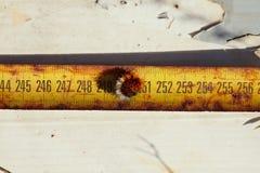 Caterpillar en het meten van band. Stock Foto