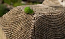 Caterpillar en la cerca fotos de archivo