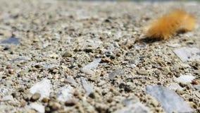 Caterpillar en la trayectoria almacen de metraje de vídeo