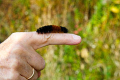 Caterpillar on a finger. Stock Image