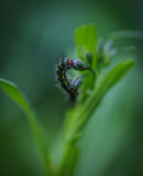 Caterpillar and the Flower. Macro of a caterpillar on a flower in the Wasatch national foerest in Utah Stock Images