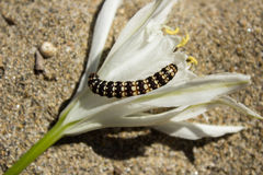 The caterpillar is fond of plants and flowers Stock Images