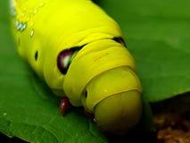 Caterpillar font face Images stock