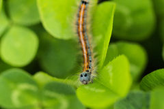 The caterpillar Royalty Free Stock Photography