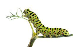 Caterpillar on grass royalty free stock photography