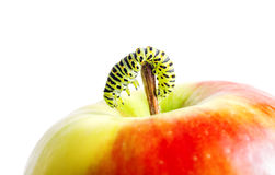 Green caterpillar on red apple Royalty Free Stock Photo