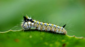 Caterpillar Stock Photos