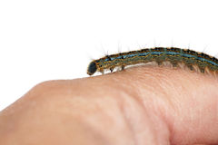 Caterpillar on hand Stock Images