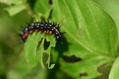 Caterpillar im Garten stockbild