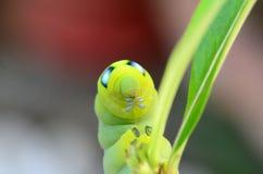 Caterpillar innehav Arkivbilder