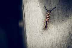 Caterpillar insect bug on concret wall nature rustic background. Caterpillar insect bug on concrete wall texture nature rustic background royalty free stock photos