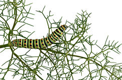 Caterpillar isolated on white background Stock Photography