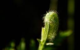 Caterpillar je zielonego liść Zdjęcie Royalty Free