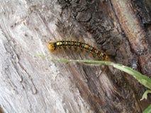 Caterpillar photos libres de droits